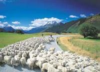 História da Nova Zelândia pecuária
